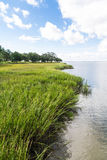 Gröna Marsh Grass Under Blue Sky Arkivbild