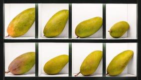 Gröna mogna mangofrukter framläggas stylishly i separata celler som är till salu i den asiatiska orientaliska marknaden arkivfoto