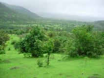 gröna monsoonrich Arkivbilder