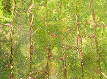 Gröna Moss Concrete Brick på ett golv i trädgården Royaltyfri Foto