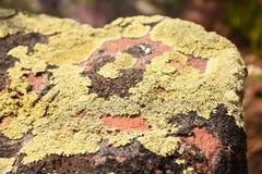Gröna Moss On Red Rock arkivfoto