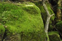 Gröna mossiga stenar Arkivfoton