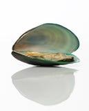 gröna musslor Royaltyfria Bilder