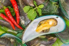 gröna musslor Fotografering för Bildbyråer