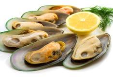 gröna musslor New Zealand Royaltyfri Foto
