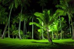 gröna nattpalmträd royaltyfria foton