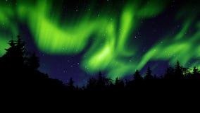 Gröna nordliga ljus och träd lager videofilmer