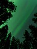 Gröna nordliga ljus som dansar i skogen Royaltyfri Bild