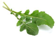 Gröna nya rucolasidor som isoleras på vit bakgrund Raketsallad eller arugula Royaltyfri Fotografi