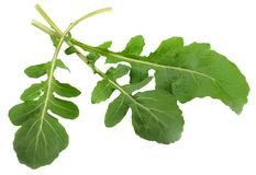 Gröna nya rucolasidor som isoleras på vit bakgrund Raketsallad eller arugula Royaltyfria Bilder