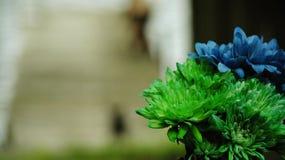 Gröna och blåa Dahlia Flowers arkivbild