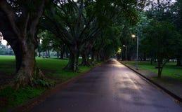Gröna och blåa träd på Ibirapueraen parkerar Royaltyfri Bild