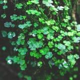 Gröna och nya kryddnejlikor i skogen royaltyfri foto