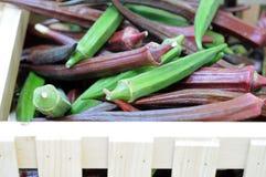 Gröna och purpurfärgade abelmoschus Royaltyfria Bilder