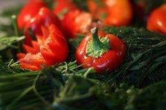 Gröna och röda peppar, dill, persilja arkivbild