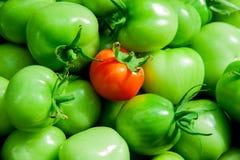 Gröna och röda tomater Royaltyfri Bild