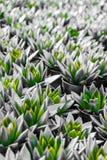 Gröna och silverblommakronblad royaltyfria foton