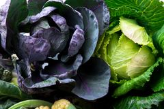 Gröna och violetta kålar Sorterat av kålbakgrund royaltyfri foto