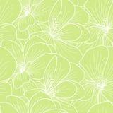 Gröna och vita pelargonblommor Arkivbilder