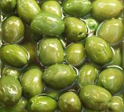 Gröna oliv Fotografering för Bildbyråer