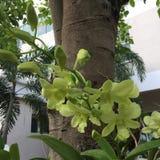 gröna orchids Arkivbild