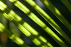 Gröna organiska blad Fotografering för Bildbyråer