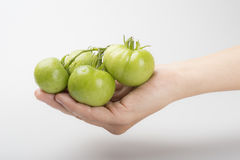 Gröna organiska tomater Royaltyfri Bild