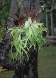 Gröna orkidér i trädgården arkivbild