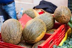 Gröna ovala bekanta Santa Claus melon också, som melon för ` för hud för paddan för ` piel de sapo `-` som är till salu på Sineu, Royaltyfri Foto