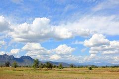 Gröna Paddy Field Under Blue Sky Arkivbild