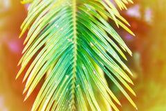 Gröna palmblad i solljus Naturlig bakgrund för tropisk växt arkivfoton