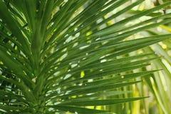 Gröna palmblad som är tropiska gömma i handflatan busksnår, tropisk bakgrund för rainforestgrönskanatur Royaltyfri Foto