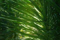 Gröna palmblad som är tropiska gömma i handflatan busksnår, tropisk bakgrund för rainforestgrönskanatur Arkivbilder