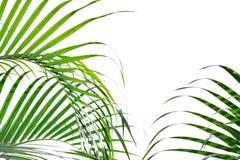 Gröna palmblad som isoleras på vit bakgrund Royaltyfri Fotografi