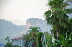 Gröna palmträd, flaggor av olika länder, berg royaltyfri fotografi