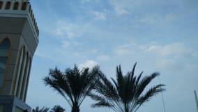 Gröna palmträd i moskéträdgården med bakgrund för blå himmel arkivbild