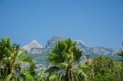 Gröna palmträd på en bakgrund av berg arkivbild