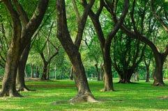 gröna parktrees Arkivfoto