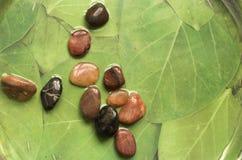 gröna pebbles för bakgrund Royaltyfri Bild