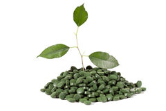 gröna pills Royaltyfria Foton