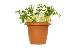 Gröna plantor royaltyfria bilder