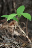 gröna plantor Royaltyfri Bild