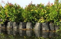 Gröna plantor Royaltyfri Fotografi