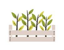 Gröna plantor som planteras i träask Unga växter eller groddar som växer i trädgårdspjällåda Naturlig dekorativ design för vår vektor illustrationer