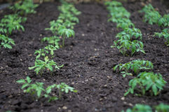 Gröna plantor spirar i trädgården Royaltyfri Bild