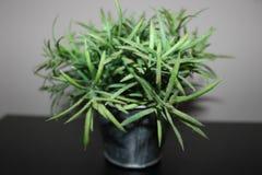 Gröna plast- blommor i mi-bethroom fotografering för bildbyråer