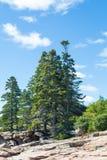 Gröna prydliga träd på Rocky Slope Royaltyfria Bilder