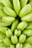 Gröna rå guld- bananer på för Pisang Mas Banana för vit bakgrund isolerad sund mat frukt stock illustrationer