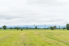 Gröna rårisfält i Thailand Royaltyfri Foto
