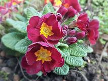 Gröna röda gulingblommor royaltyfri fotografi